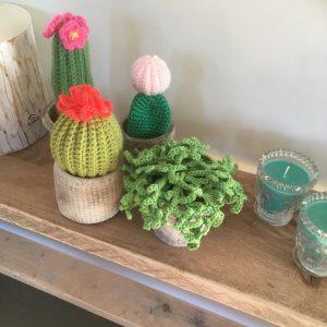 Cactus Haken In Eersel 25 Juni 2019 Sjantietop
